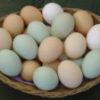 Thumbnail image for New Coupon: $.55/2 Dozen Eggs (Harris Teeter Deal)