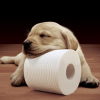 Thumbnail image for Amazon: Cottonelle Toilet Paper- Double Dip On Coupons- Stock Up Price