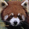 Thumbnail image for Ranger Rick Magazine As low as $9.99/yr