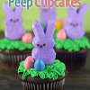 Thumbnail image for Marshmallow Peep Cupcakes