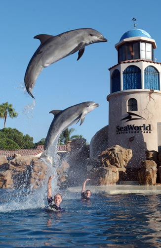 sea_world_san_diego