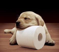 cottonelle-toilet-paper-puppy-dog