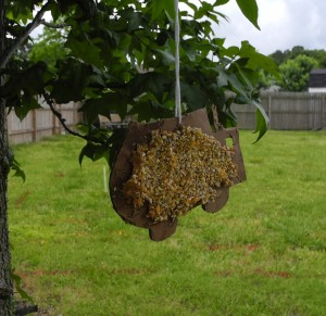 frugal bird feeder
