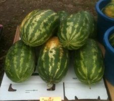 seeded melons