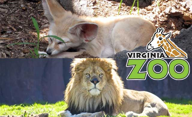 Discounts on Virginia Zoo Tickets