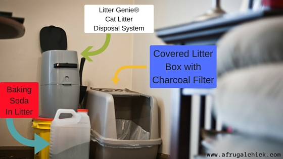 litter box smell solutions 1