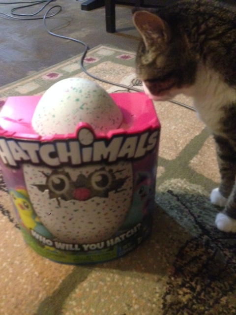 hatchimal-bella