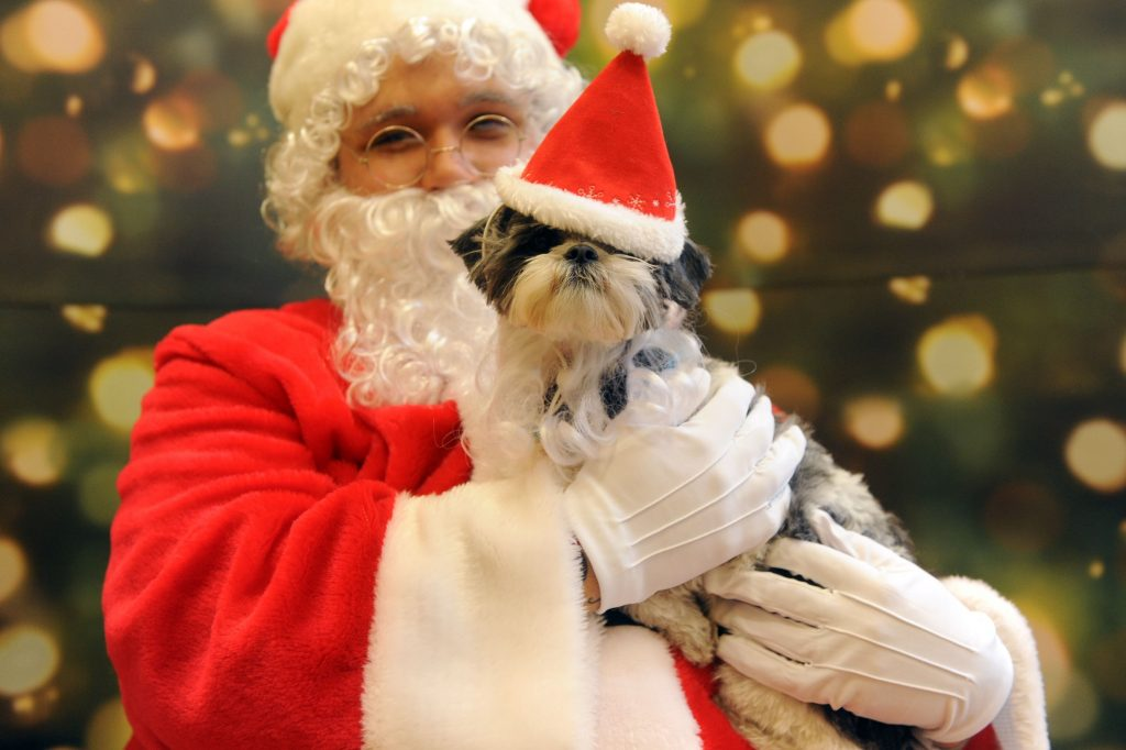petsmart-santa-photos