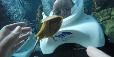 Discovery Cove Florida- What To Expect!