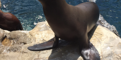 Feed Sharks, Stingrays and Sea Lions at SeaWorld f...