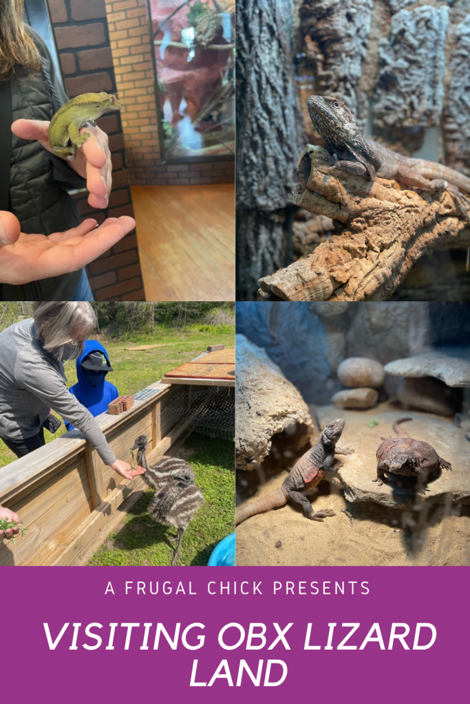 Visiting OBX Lizard Land- Head to Moyock NC and you can visit Lizard Lane. See and touch snakes, lizards, emus and more with a local business!