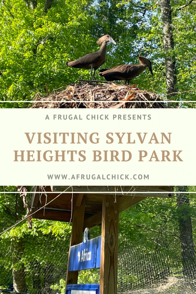 Visiting Sylvan Heights Bird Park in Scotland Neck, NC- Tucked away in a town in North Carolina we checked out birds from all over the world.